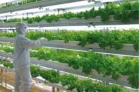 人工光植物工場