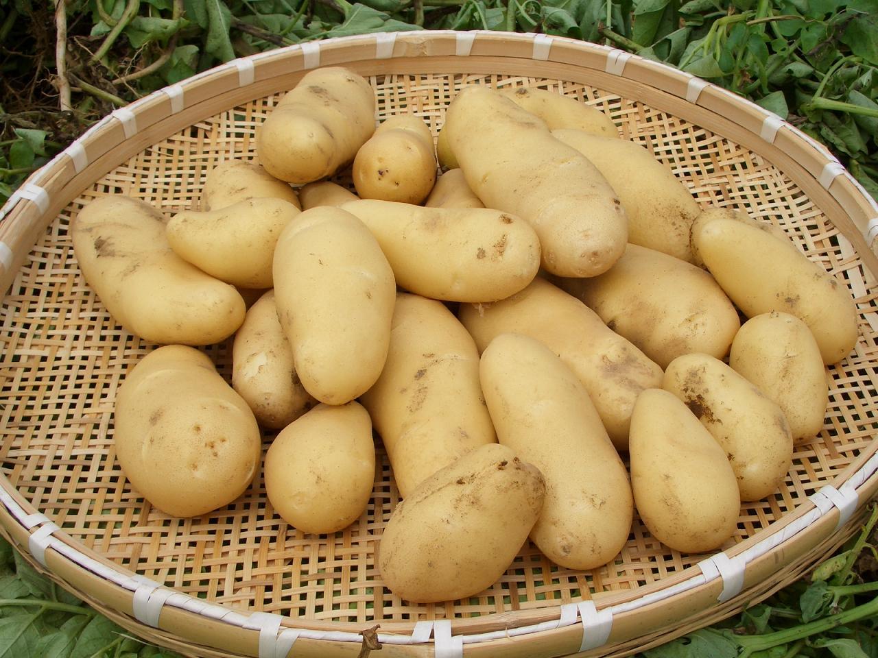 三島馬鈴薯