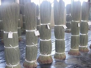 くまもと県産い草