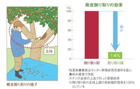 樹皮削り取りの様子とその効果