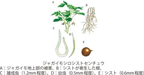 2)動植物防疫の取組:農林水産...