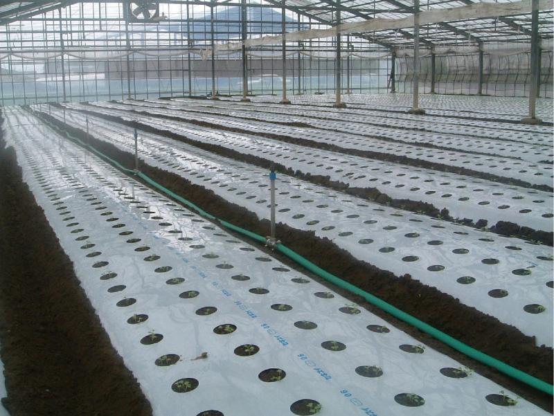 水稲育苗用スプリンクラーによるかん水