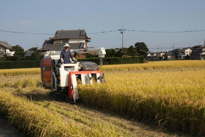 水稲の収穫状況