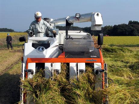 大型機械による収穫作業