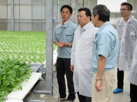 水耕栽培でのサラダほうれん草栽培について、説明を受けられる佐藤農林水産大臣政務官             (泉南市)