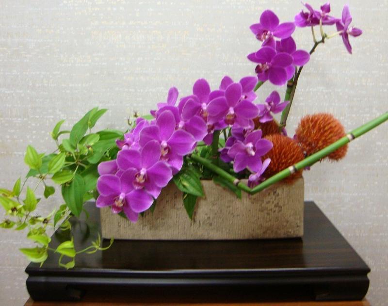 今週の花「残暑」