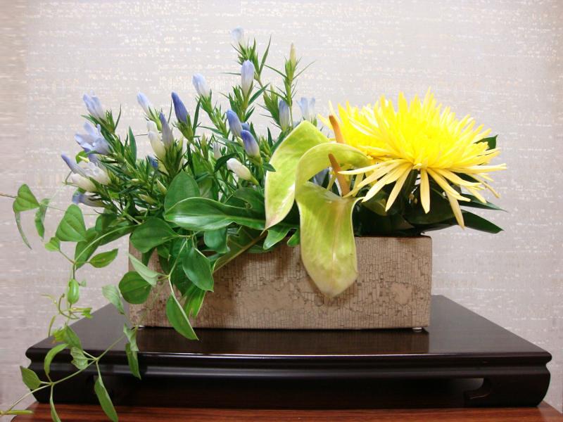 今週の花「夏休み」