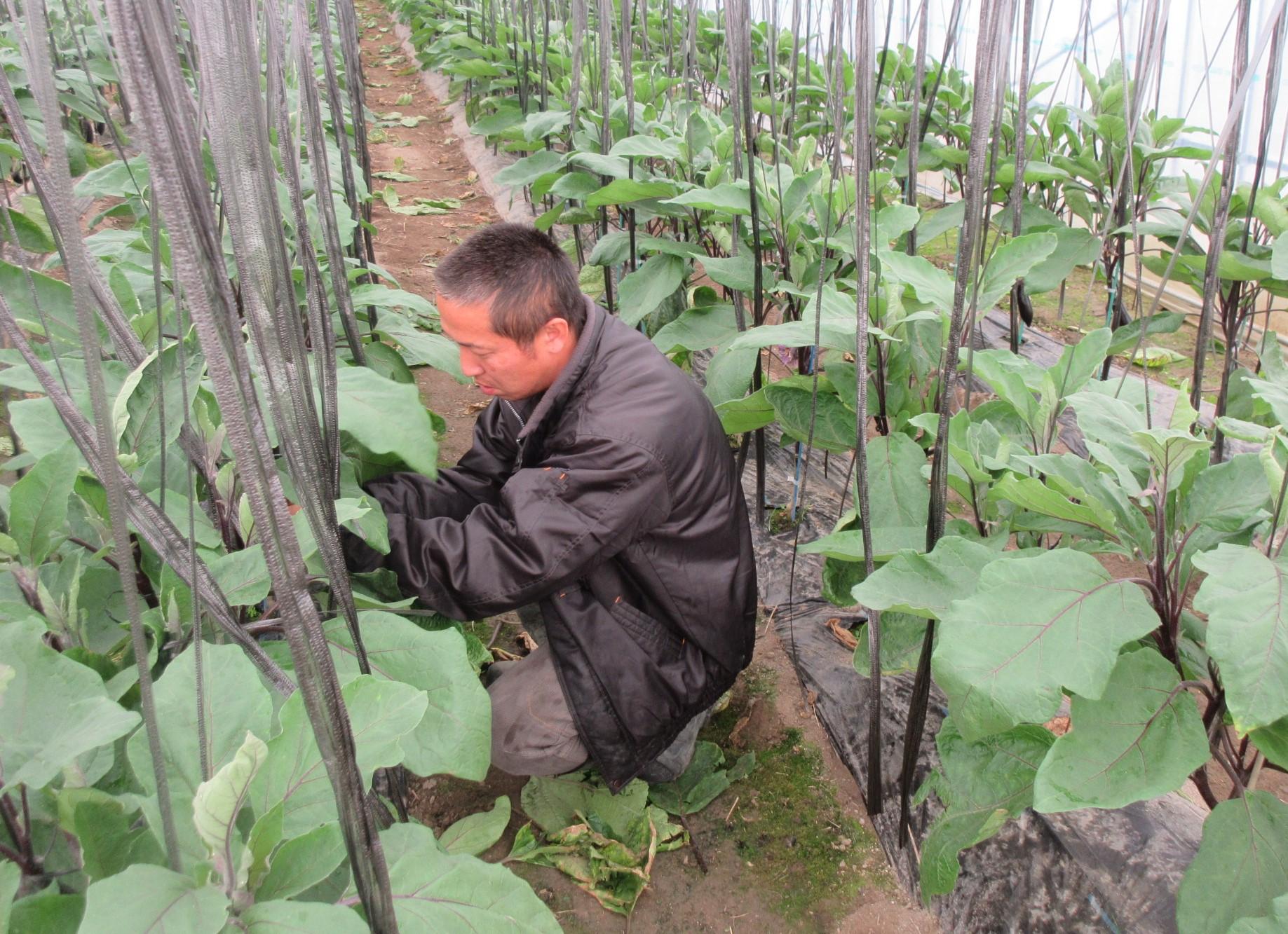 若手農業者のリーダー的存在|大阪府富田林市