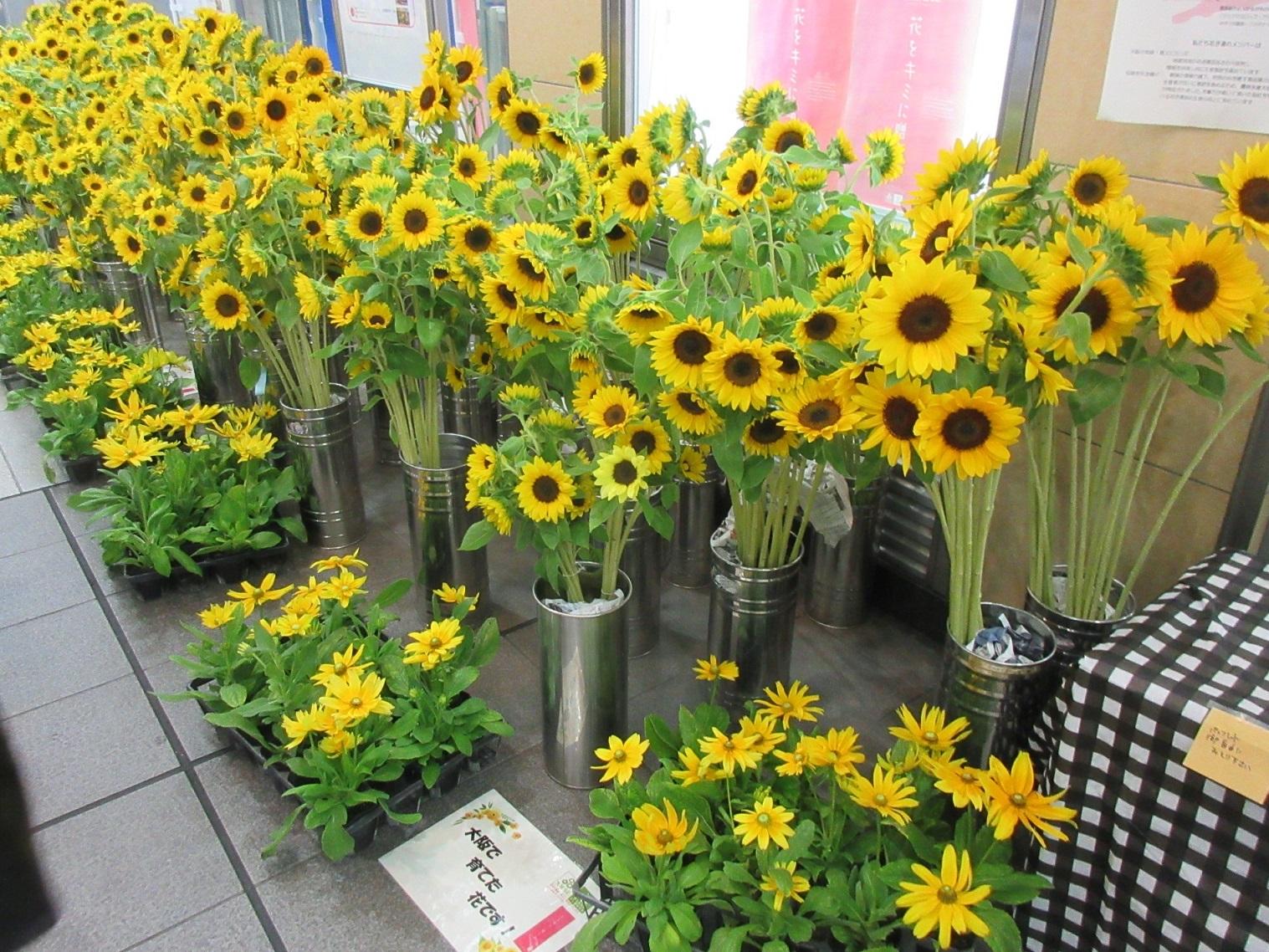 大阪産「花」の展示で元気発信|大阪市