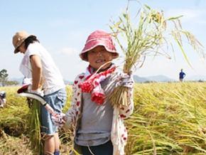 須原の自然再生に挑み続ける|滋賀県野洲市
