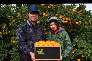 人と「みかん」と出会い新規就農へ|和歌山県有田市