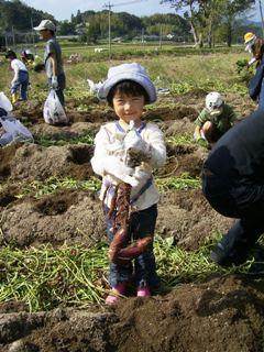芋掘り体験の様子