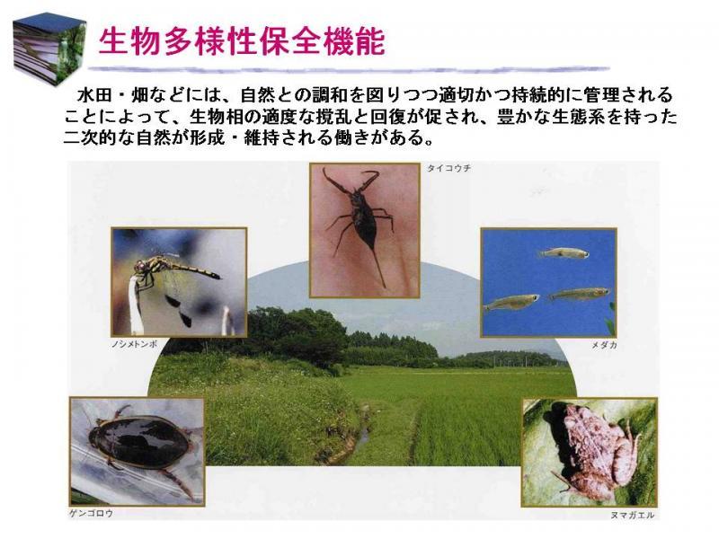 生物多様性