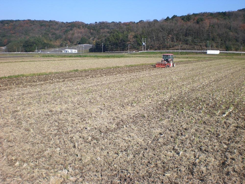 大麦の種まき風景