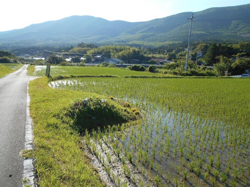 対馬島内では田植えが最盛期です。(厳原内山地区)