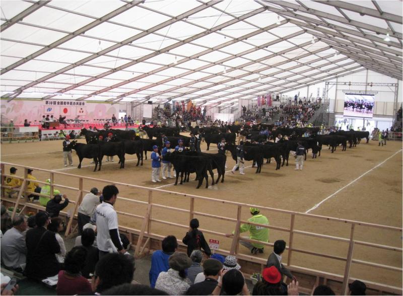 和牛の審査風景