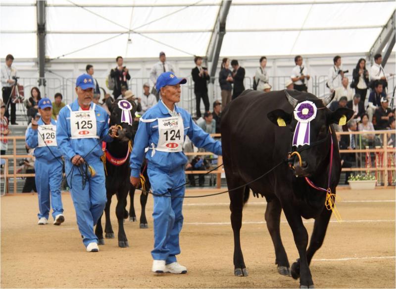 大会最終日、優秀な成績を収めた出品牛のパレードの様子