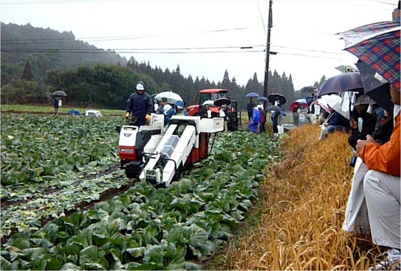 高能率キャベツ収穫機による収穫作業の様子