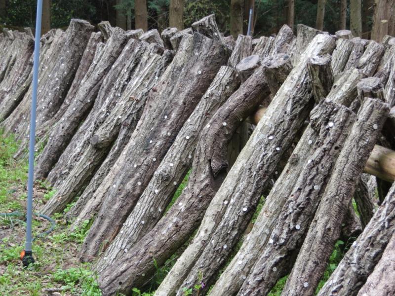 長崎県対馬市のしいたけのほだ木です。