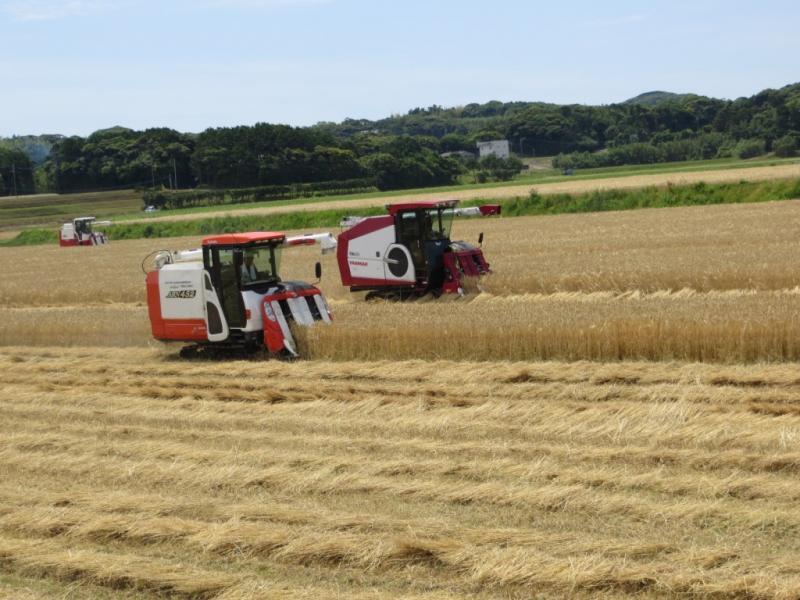 長崎県壱岐市での二条大麦収穫風景です。