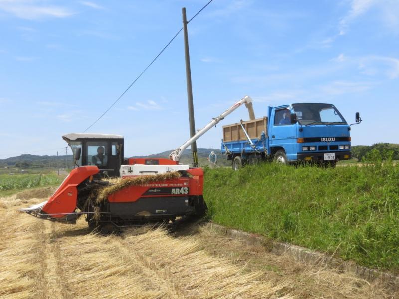 二条大麦を収穫してトラックに移しています。