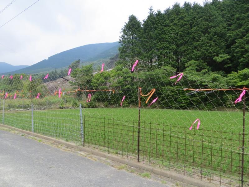 長崎県対馬市での鹿、猪対策です。