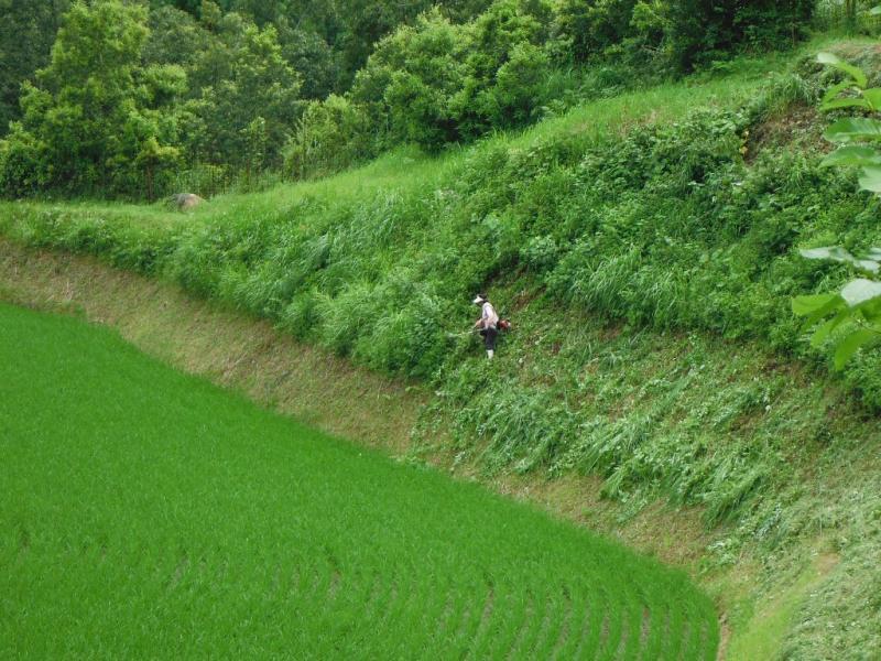 大分県由布市の草刈りを頑張る女性