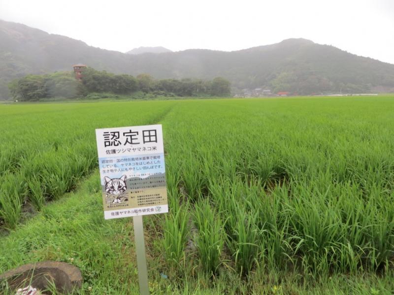 長崎県対馬市の田園風景