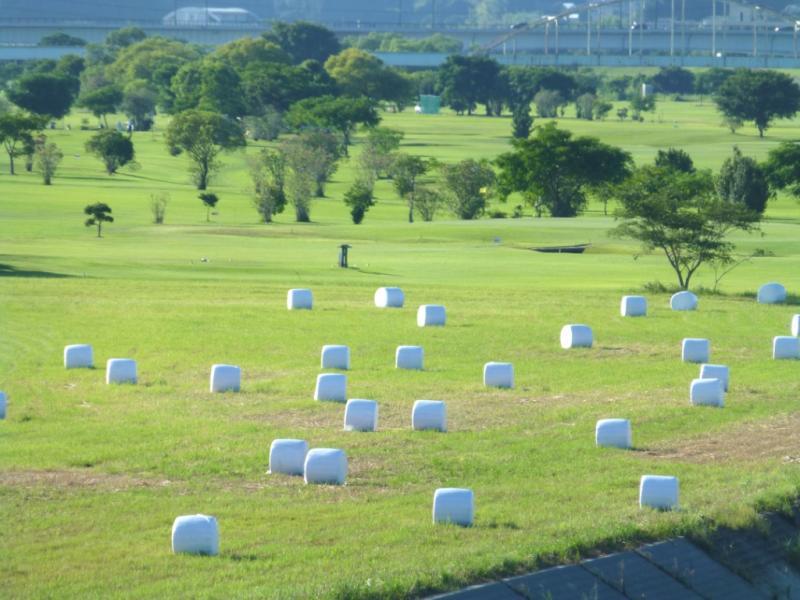 宮崎市の河川敷で飼料用に梱包されていました。