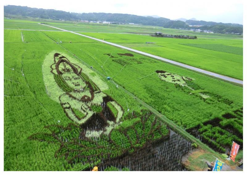 鹿児島県南九州市の田んぼアートです。