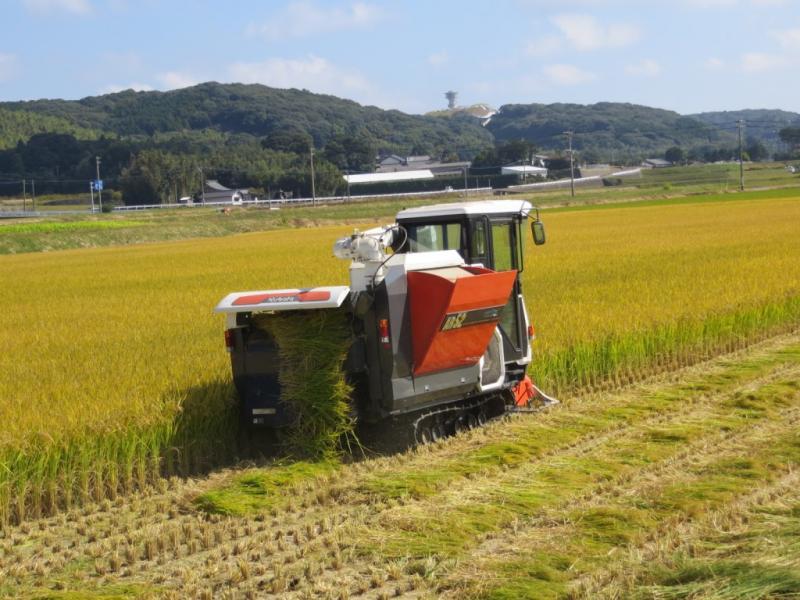 壱岐市での稲刈り風景です。