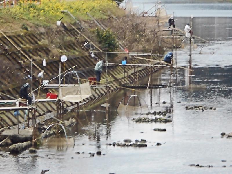 佐々川のシロウオ漁の様子1です。