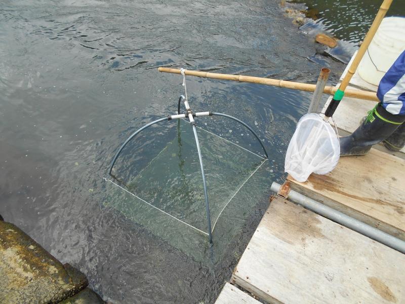 佐々川のシロウオ漁の様子2です。
