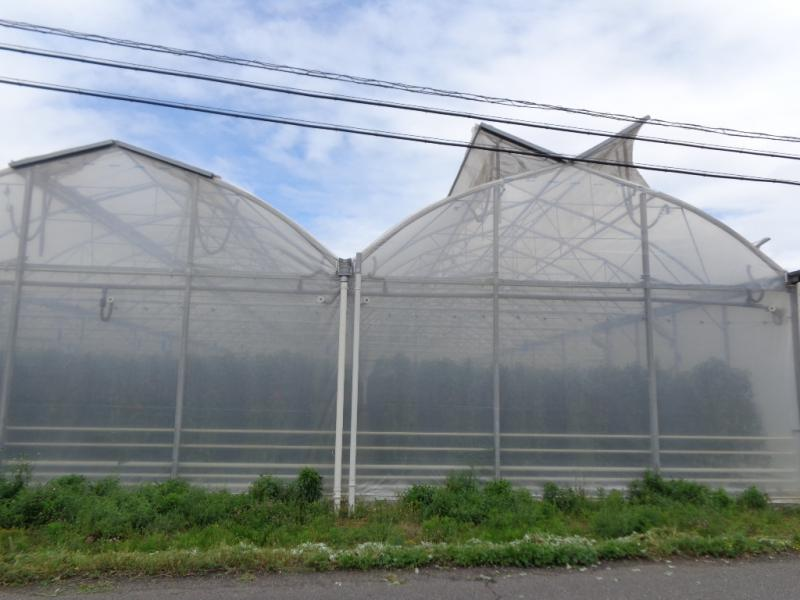 パプリカを栽培しているハウスです。