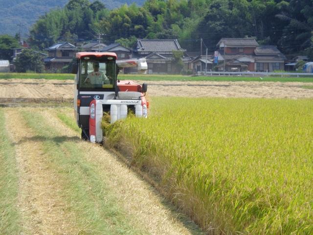 佐賀の七夕コシヒカリの刈り取り風景です。