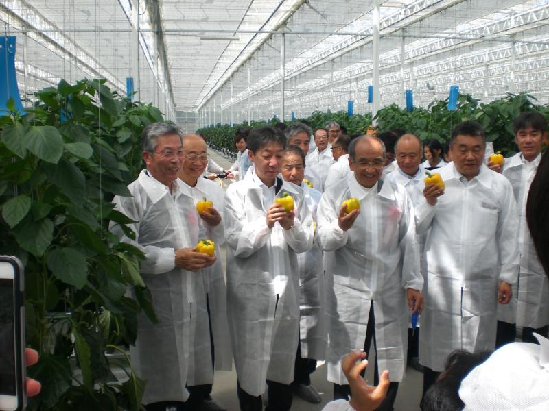 次世代施設園芸でパプリカを初収穫