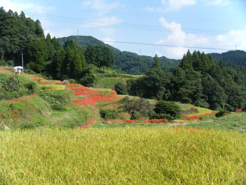 江里山の棚田風景です。