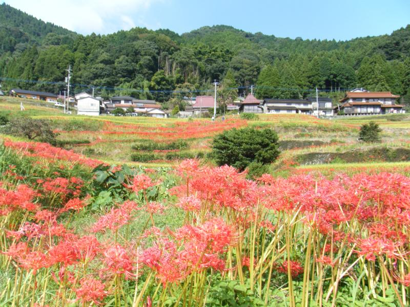 江里山の棚田の風景です。