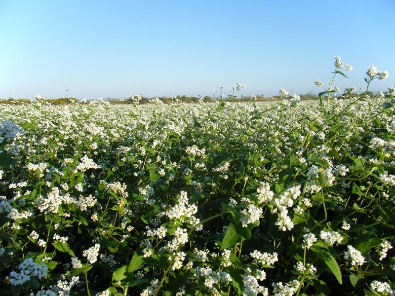 佐賀空港近くのそばの花です