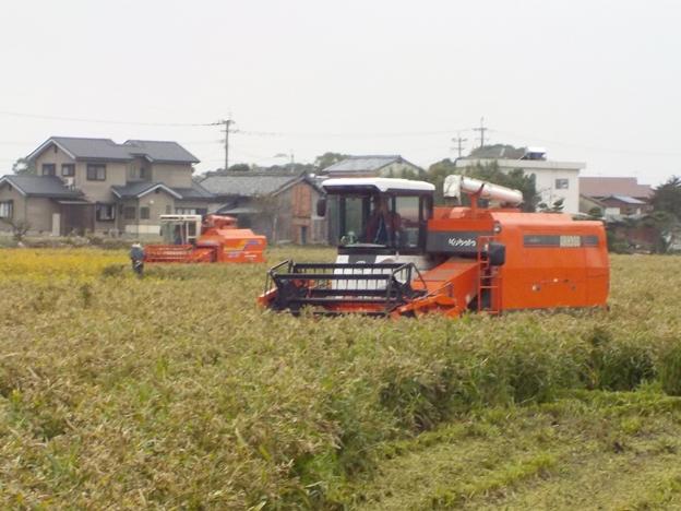 久留米市でハトムギの収穫が行われていました。
