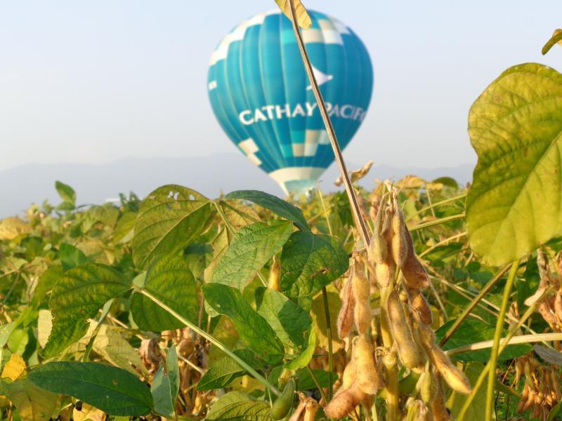 佐賀の大豆とバルーン