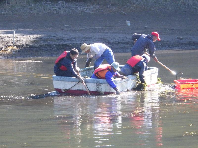 ため池の環境保全活動に参加しました