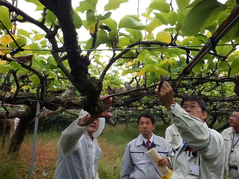 果樹園地調査の模様