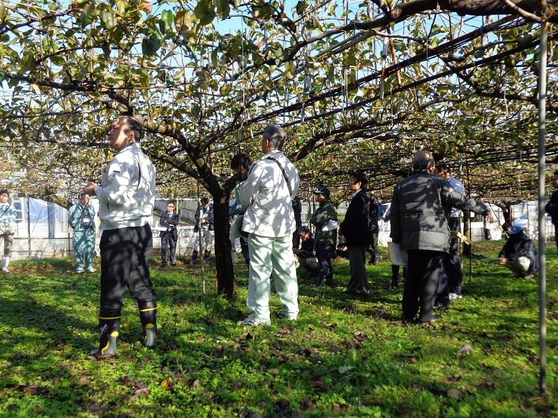 佐賀で梨の現地検討会がありました