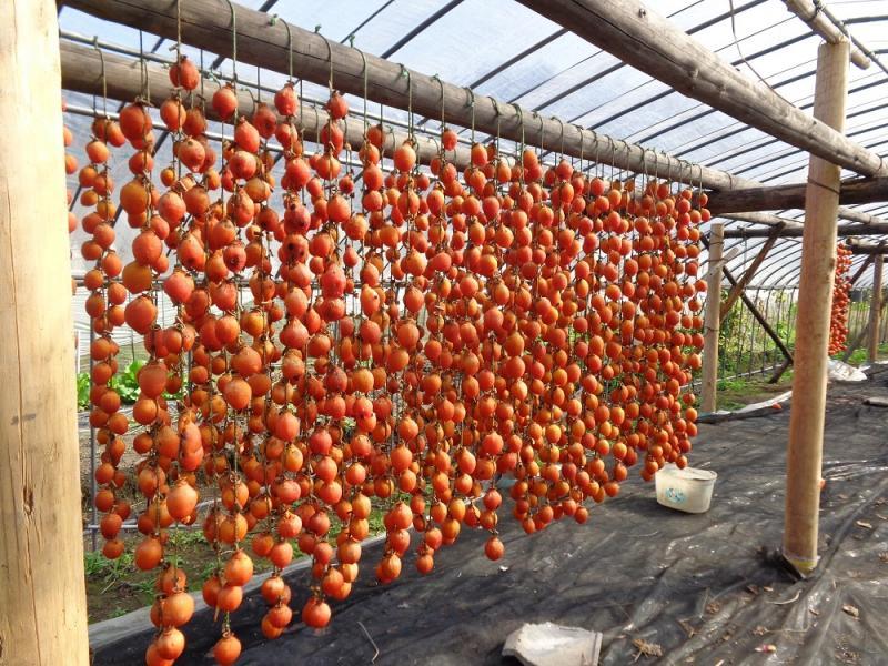 干し柿を作成中です。
