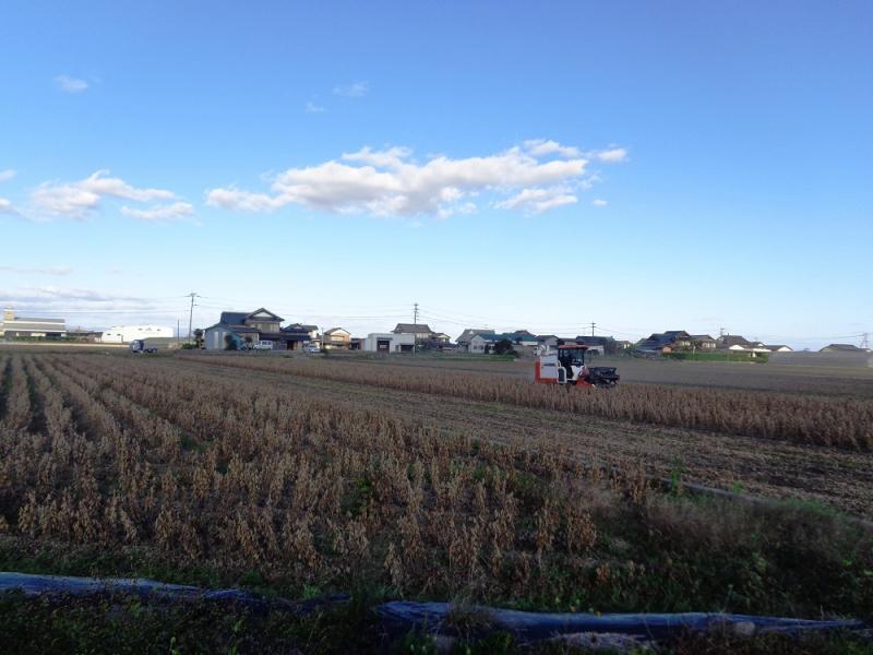 大豆の収穫風景