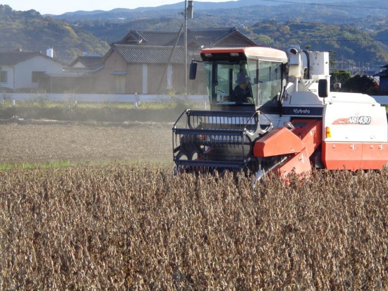 大豆収穫中の汎用コンバイン