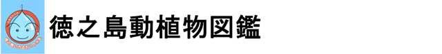 徳之島動植物図鑑