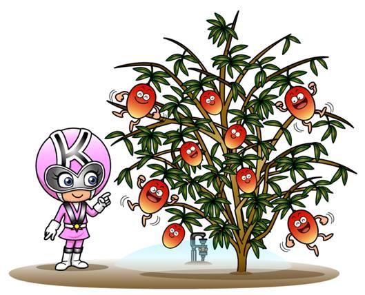 果樹にも水を