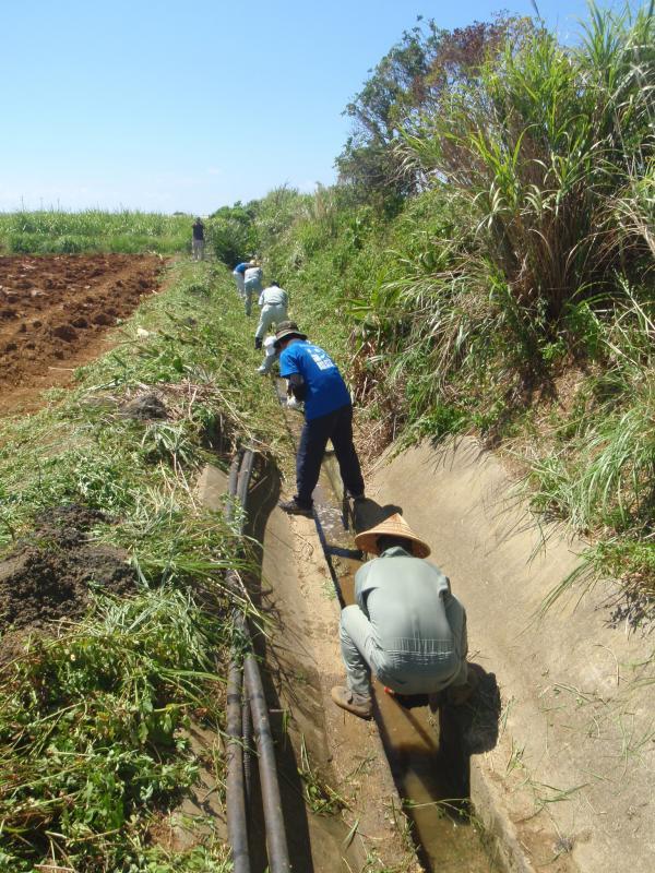 排水路の泥上げの様子